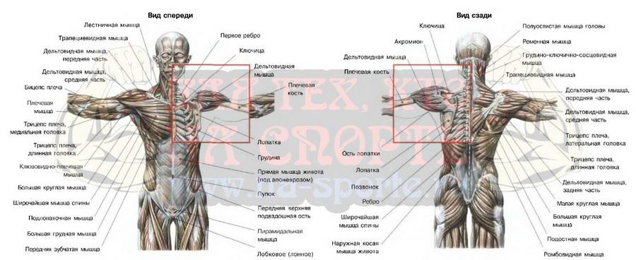 Домашние упражнения на мышцы