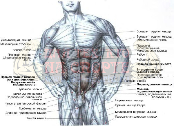 Упражнения для дома на мышцы