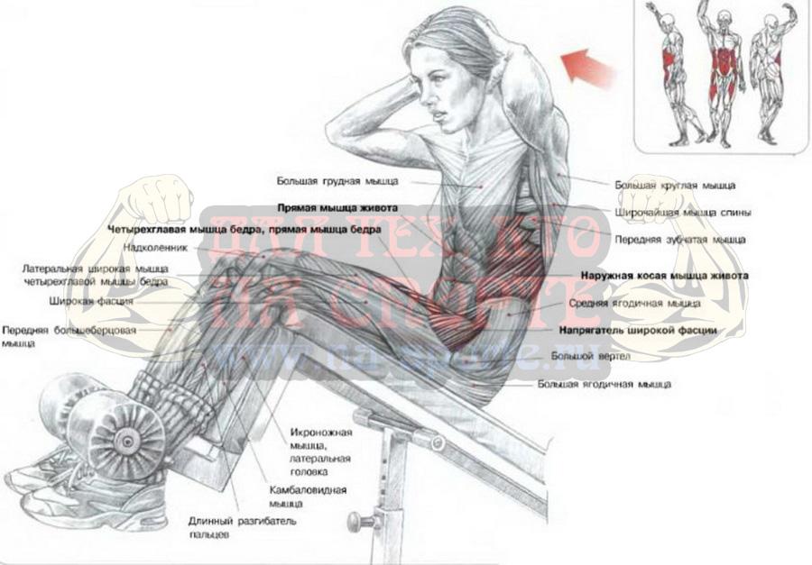 мышцы брюшного пресса и